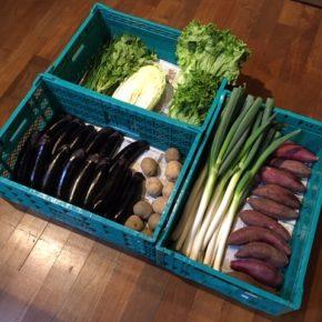 やんばるから森さんの無農薬野菜、なす・白菜・白ネギ・ニラ・レタス・パクチー・トマト・さつまいも・ジャガイモが入荷しました。