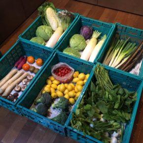 やんばるから森さんの無農薬野菜、キャベツ・ブロッコリー・サニーレタス・アスパラガス・白菜・大根・青梗菜・白ネギ・赤玉ねぎ・人参・椎茸・長芋・ごぼう・かぶ・柿・サルナシ・レモンが入荷しました。