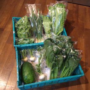 今帰仁村 片岡農園さんの無農薬野菜が入荷しました!本日はリーフレタス・小松菜・にんにく葉・かぶ・大根葉・冬瓜が入荷しました。 ほか北中城村 ソルファコミュニティさんの自然栽培のローゼル・人参葉・よもぎも入荷しました。