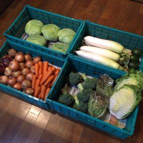 やんばるから森さんの無農薬野菜、白菜・大根・キャベツ・ブロッコリー・サニーレタス・人参・玉ねぎ・赤玉ねぎ・アボカドが入荷しました。