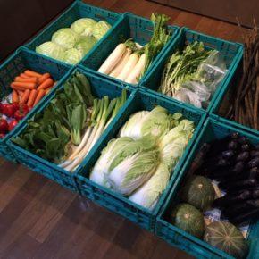 やんばるから森さんの無農薬野菜、キャベツ・白菜・大根・ブロッコリー・青梗菜・大根葉・白ネギ・かぶ・なす・パプリカ・人参・玉ねぎ・ごぼう・栗かぼちゃ・柿が入荷しました。