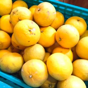 宜野湾市 比嘉秀人さんの自然栽培の甘夏が再入荷しました!