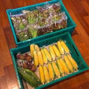八重瀬町 島袋悟さんの自然栽培サニーレタス・トウモロコシ・ビーツ・ジャンボインゲンが入荷しました!