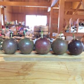 国頭村 森岡いちご農園さんの自然栽培パッションフルーツが入荷しました!※いちごの収穫は2月の中旬予定との事です。