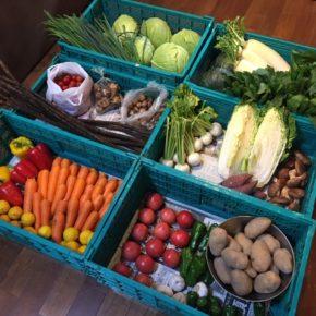 明日1/8(fri)より通常営業となります。やんばるから森さんの無農薬栽培の野菜が入荷しました。
