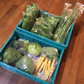 今帰仁村 片岡農園さんの無農薬栽培のキャベツ・ブロッコリー・ネギ・春菊・パクチー・サラダほうれん草・島にんじんが入荷しました!