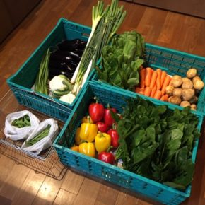 やんばるから森さんの無農薬野菜、ほうれん草・青梗菜・小松菜・白ネギ・カリフラワー・ブロッコリー・パプリカ・万能ねぎ・にら・きゅうり・ジャガイモ・なす・スナップエンドウ・いんげん・人参・椎茸・トマト・ミニトマト・玉ねぎ・イチゴが入荷しました。