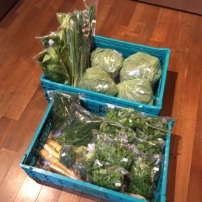 今帰仁村 片岡農園さんの無農薬栽培のキャベツ・ブロッコリー・ネギ・春菊・パクチー・ほうれん草・島にんじん・ディルが入荷しました!