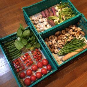 やんばるから森さんの無農薬栽培のイチゴ・トマト・そら豆・青梗菜・椎茸・にら・長芋・かぶ・さつまいも・にんにくが入荷しました。