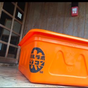 2016年から始まった台湾苗を使ったハルラボ商店の「沖縄れんこん」の栽培。 宜野湾・名護での栽培を経て、今年はその進化系のコンテナ栽培をベアーズネイチャーファームの森さんの監修のもと、 ハルラボ商店のおつきあいのある自然栽培・有機無農薬栽培の農家さんやカフェオーナーさんが集まり「田んぼが無くても畑で出来るレンコン栽培」をスタートしました。 初年度は20名のレンコン栽培の有志の皆さんと50個のコンテナで収量1㌧を目指し、早ければ10月から店頭に並ぶ予定です。 機能性に注目が集まる根菜、レンコン。 わが家のハルラボ商店はこの沖縄から、コンテナ栽培でレンコンの普及に務めたいと思っています。