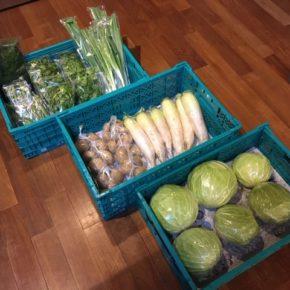 今帰仁村 片岡農園さんの無農薬栽培のキャベツ・インゲン・大根・じゃがいも・ネギ・パクチー・ディルが入荷しました!