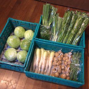 今帰仁村 片岡農園さんの無農薬栽培のキャベツ・インゲン・大根・じゃがいも・ネギ・パクチー・セロリが入荷しました!