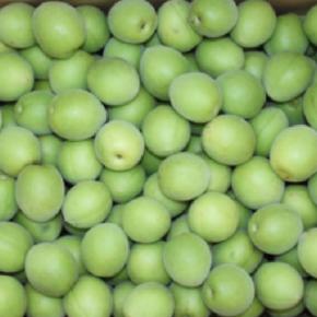 今年も梅の季節がやってきます。 大分県産 無農薬・無肥料の梅の予約を開始します! シロップなら青梅、梅干しなら完熟が最適です。 今回もご利用用途に合わせてオーダー頂けますので ご予約時にお伝え下さい。 受取りの目安として青梅は6/1-6/15、完熟梅は6/15-20の予定です。