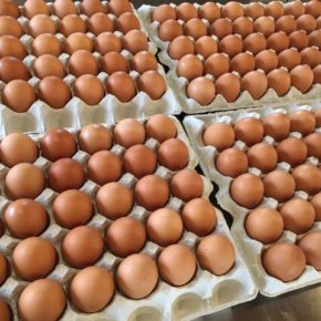 山口県 秋川牧園の卵・鶏肉・チキンナゲット・鶏つくねなどが入荷しました!エサは全てNON-GMOの植物性で、トウモロコシはポストハーベストフリー。また、定期的に卵とエサの放射能検査を行っています。卵はバラ売りで販売しますので、できましたら卵ケースをご持参下さい。 秋川牧園の卵の黄身は自然な黄色。卵臭さもないので卵かけご飯でも美味しいです。
