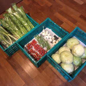 今帰仁村 片岡農園さんの無農薬栽培のキャベツ・インゲン・セロリ・ネギ・中玉トマト・ミニトマト・新玉ねぎが入荷しました!