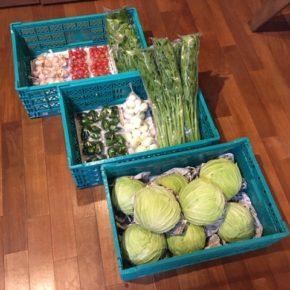 今帰仁村 片岡農園さんの無農薬栽培のキャベツ・セロリ・ミニトマト・玉ねぎ・ピーマン・ツルムラサキ・島ニンニクが入荷しました!