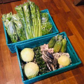 今帰仁村 片岡農園さんの無農薬栽培のキャベツ・セロリ・ウンチェバー・サラダヘチマ・なすび・ピーマン・ツルムラサキ・島ニンニクが入荷しました!