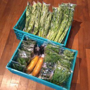 今帰仁村 片岡農園さんの無農薬栽培の青じそ・モーウィ(赤瓜)・なすび・セロリ・ウンチェバー・ピーマン・ツルムラサキが入荷しました!