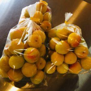 大分県産 自然栽培の完熟梅が入荷しました! 今年は例年よりもかなり大きく梅干しに最適です。 来週から今帰仁村 片岡農園さんの赤しそも入荷予定です。