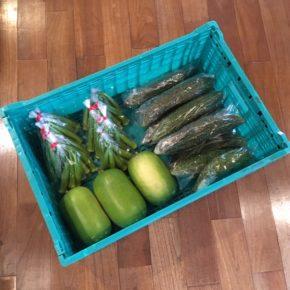 八重瀬町 島袋悟さんの自然栽培の丸オクラ、南風原町 いもり屋さんの有機無農薬栽培のゴーヤー・冬瓜が入荷しました!