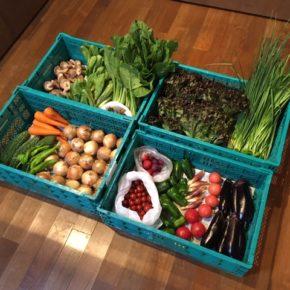 やんばるから森さんの無農薬栽培のサニーレタス・青梗菜・小松菜・ミニトマト・トマト・人参・舞茸・椎茸・マッシュルーム・なす・ゴーヤー・茗荷・万能ねぎ・ニラ・ピーマン・プラムが入荷しました。