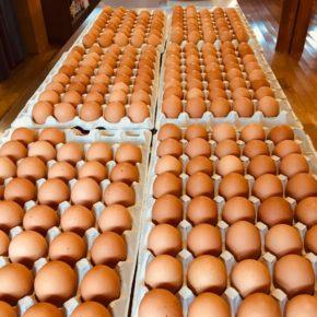 山口県 秋川牧園の卵・鶏肉が入荷しました!エサは全てNON-GMOの植物性で、トウモロコシはポストハーベストフリー。また、定期的に卵とエサの放射能検査を行っています。卵はバラ売りで販売しますので、できましたら卵ケースをご持参下さい。 秋川牧園の卵の黄身は自然な黄色。卵臭さもないので卵かけご飯でも美味しいです。