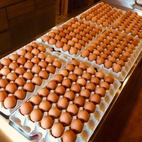山口県 秋川牧園の卵が入荷しました!エサは全てNON-GMOの植物性で、トウモロコシはポストハーベストフリー。また、定期的に卵とエサの放射能検査を行っています。卵はバラ売りで販売しますので、できましたら卵ケースをご持参下さい。 秋川牧園の卵の黄身は自然な黄色。卵臭さもないので卵かけご飯でも美味しいです。