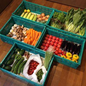 やんばるから森さんの無農薬栽培のサニーレタス・とうもろこし・アスパラ・アボカド・きゅうり・小松菜・ミニトマト・トマト・人参・じゃがいも・パプリカ・玉ねぎ・椎茸・マッシュルーム・なす・ゴーヤー・茗荷・万能ねぎ・ししとう・枝豆・ニンニク・レモンが入荷しました。
