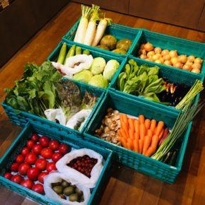 やんばるから森さんの無農薬栽培のサニーレタス・アボカド・とうもろこし・きゃべつ・大根・きゅうり・なす・小松菜・青梗菜・さつまいも・万能ねぎ・へちま・人参・玉ねぎ・ズッキーニ・アスパラガス・トマト・ミニトマト・枝豆・マッシュルーム・椎茸・プラム・サルナシ・ブルーベリーが入荷しました。