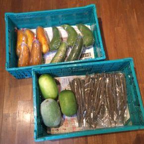 八重瀬町 島袋悟さんの自然栽培のモーウィ、南風原町 いもり屋さんの有機無農薬栽培のヘチマ・サラダゴボウ・冬瓜が入荷しました!