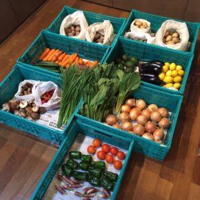 やんばるから森さんの無農薬栽培の人参・玉ねぎ・ジャガイモ・キュウリ・小松菜・トマト・ミニトマト・アボカド・茗荷・なす・ニラ・ピーマン・ニンニク・きゅうり・椎茸・マッシュルーム・レモン・サツマイモが入荷しました。