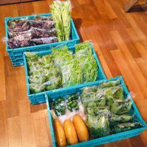 今帰仁村 片岡農園さんの無農薬栽培の赤じそ・青じそ・モーウィ(赤瓜)・ウンチェバー・ピーマン・ツルムラサキ・モロヘイヤが入荷しました!