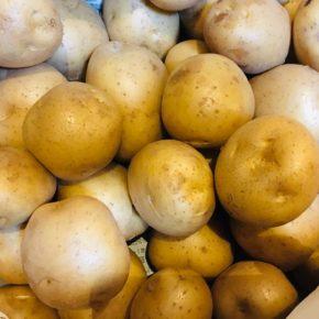 鹿児島県 園山農園さんより有機無農薬栽培のジャガイモとキュウリが入荷しました!