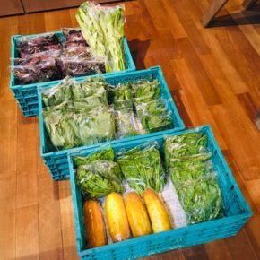 今帰仁村 片岡農園さんの無農薬栽培の赤じそ・青じそ・ウンチェバー・モーウィ・丸オクラ・ツルムラサキ・モロヘイヤが入荷しました!
