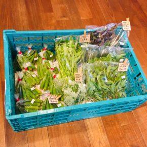 北中城村 ソルファコミュニティさんの自然栽培のカンダバー・エンサイ・ヨモギ・角オクラ・モロヘイヤ・ヨモギが入荷しました!
