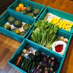 やんばるから森さんの無農薬栽培の小松菜・ミニトマト・栗かぼちゃ・コリンキー・なす・アボカド・きゅうり・ミョウガ・レモンが入荷しました!