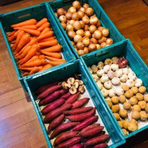 やんばるから森さんの無農薬栽培のさつまいも・人参・玉ねぎ・じゃがいも・椎茸・ニンニクが入荷しました!