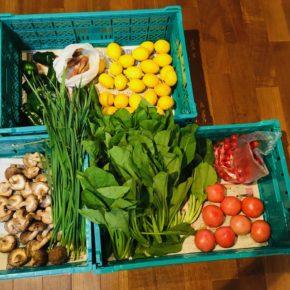 やんばるから森さんの無農薬栽培の小松菜・ミニトマト・大玉トマト・きゅうり・ミョウガ・椎茸・ピーマン・ニラ・万能ねぎ・レモンが入荷しました!