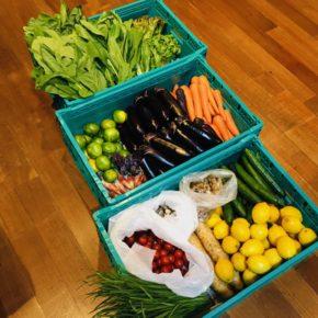 やんばるから森さんの無農薬栽培のサニーレタス・小松菜・青梗菜・ミニトマト・きゅうり・椎茸・舞茸・マッシュルーム・長芋・ニラ・人参・なす・茗荷・レモン・プラム・温州みかんが入荷しました!