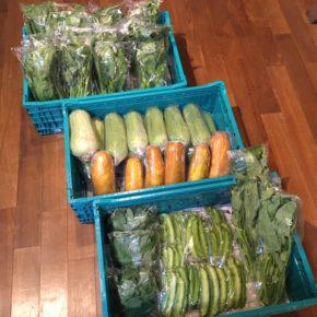 今帰仁村 片岡農園さんの無農薬栽培の小松菜・サラダナーベラー・うりずん豆・ウンチェバー・モーウィ・モロヘイヤが入荷しました!