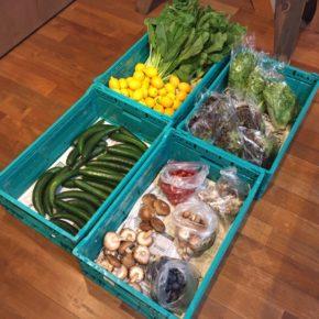 やんばるから森さんの無農薬栽培のサニーレタス・リーフレタス・小松菜・青梗菜・ニラ・ミニトマト・きゅうり・椎茸・舞茸・マッシュルーム・人参・なす・玉ねぎ・じゃがいも・レモン・プラム・柿が入荷しました!