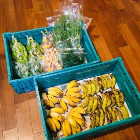 うるま市 玉城勉さんの自然栽培の銀バナナ・丸オクラ・うりずん豆・新生姜・生姜、北中城村 ソルファコミュニティさんの自然栽培のブラジル島バナナ・ヨモギ・ねぎ・ツルムラサキが入荷しました。